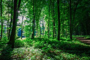 Wall Mural - nature green wood sunlight backgrounds
