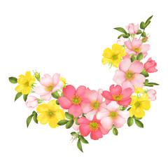 Dog-rose blooms. wild rose vector illustration