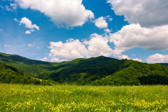 grassy fields with wild herbs in mountains. beautiful summer landscape in Ukrainian alps under the blue sky with clouds on a sunny day