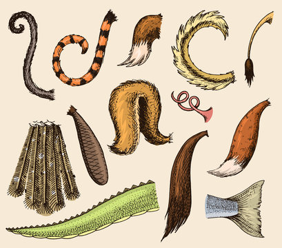 Animal tail vector animalistic tailed breast with furry feathers of limb illustration of tailend brush set isolated on background