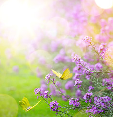 Fototapete - abstract spring Background; spring flower and butterfly