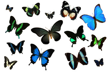 Collection of Multiple Butterflies on the Same Page for Many Illustrative Uses 2