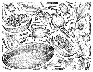 Hand Drawn of Fresh Fruits on White Background