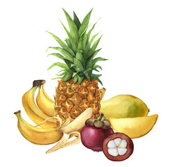 Watercolor tropical fruit. Pineapple, bananas, mangosteen, mango. Hand painted tropical fruits isolated on white background. For design or background. Food illustration.