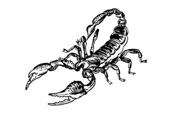 Graphical sketch of scorpion on white background,vector illustration for tattoo and printing