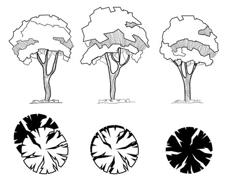 Set of trees for decoration and landscape architectural drawings. Exterior Features. Top view directly