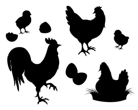 Chicken,rooster,Chicks,eggs, black silhouette.