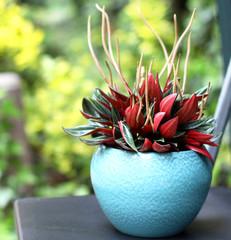 Beautiful plant in the flowerpot