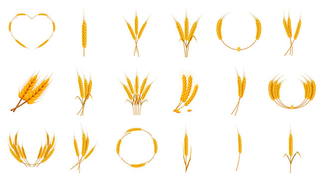 Wheat icon set, cartoon style