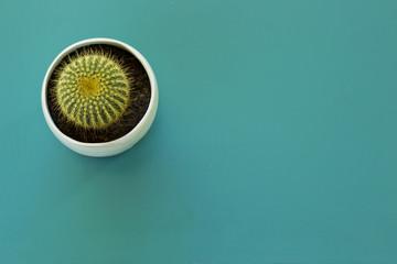 Tiny Barrel Cactus
