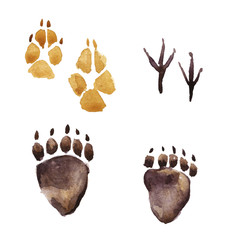 Animal footprints, Paw prints, Watercolor illustration