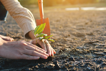 Human hands planting little green plant on cracked dry ground, concept drought and crisis environment,selective and soft focus