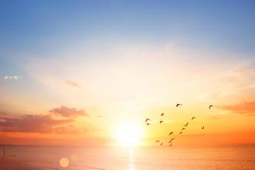 Flying bird at sunset sky background