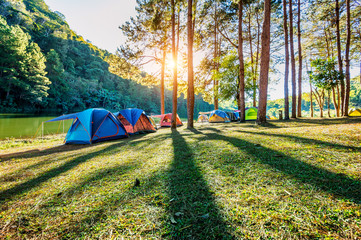 Wall Mural - Camping tents under pine trees with sunlight at Pang Ung lake, Mae Hong Son in THAILAND.