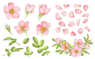 Dog-rose blooms. wild rose vector set