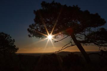 Silueta de pino resinero y sol al amanecer. Pinus pinaster. Pinar de Castrocontrigo, León, España.