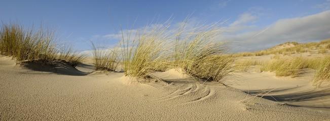 dune sauvage