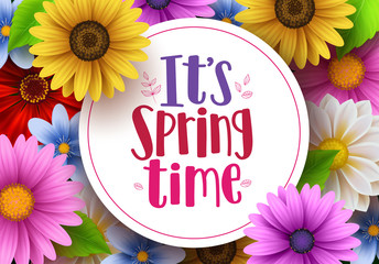 It's spring time vector greeting background design template with white space for text and colorful various daisy flowers and elements for spring season. Vector illustration.