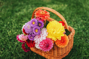 Basket full of colorful autumn flowers on green background