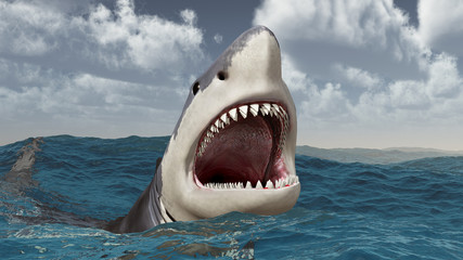 Great white shark in the stormy sea
