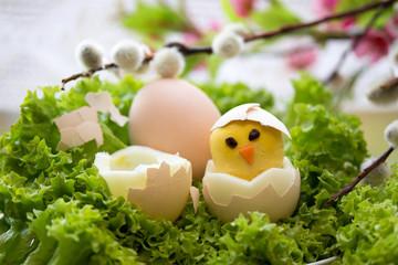 Küken aus einem Ei