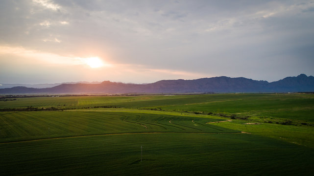 Aerial photo over a green wheat field in the Swartland in the western cape of South Africa