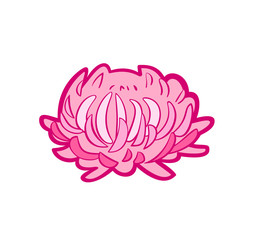 Pink Aster. Vector icon in flat style on white