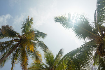 Coconut palm trees at tropical coast against blue sky