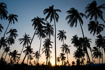 Silhouette of tropical palm trees during sunset