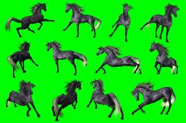 Collezione su sfondo chroma key di pose di cavallo arabo