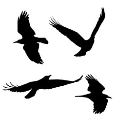 Set of vector silhouettes of flying birds