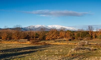 Monte Teleno, pradera y robledal. León, España.