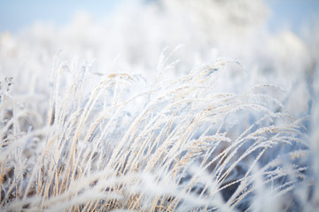 Winter background, blurred snow field landscape.