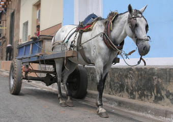 old cart horse in Nicaragua