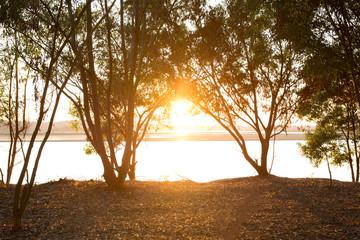 sunrise light rays fall landscape trees silhouette