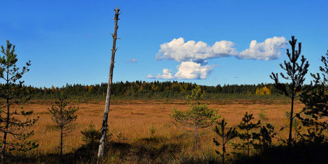 Panorama view over bog.