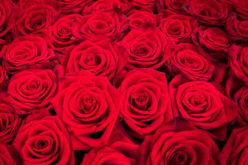 Strauß Rote Rosen als Hintergrund Textur