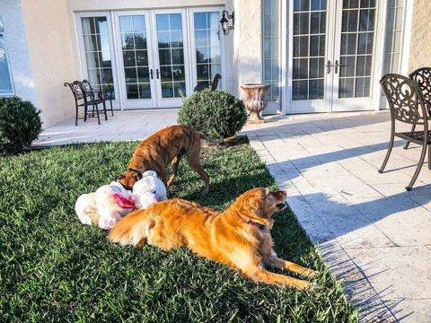 dogs and a teddy bear