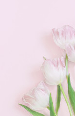 Blank  greeting card with  pink tulips on pink background, top view, mock up. Vertical format