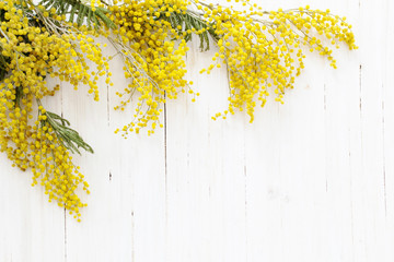 mimosa on white wooden background