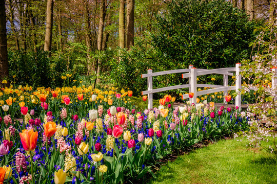 Beautiful garden. Park in The Spring. Spring landscape