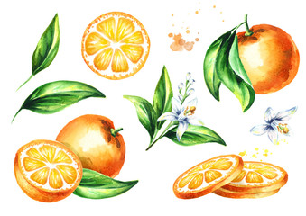 Fresh Orange compositions set. Watercolor hand drawn illustration, isolated on white background