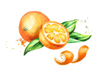 Fresh orange  fruit and leaves composition. Watercolor hand drawn illustration, isolated on white background