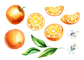 Fresh Orange fruits and leaves with flowers collection. Watercolor hand drawn illustration, isolated on white background