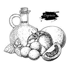 Caprese salad ingredients. Vector drawing.