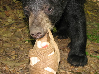 While photographing this cub, he curiously came over to sniff my foot and tried to pull my sandal off