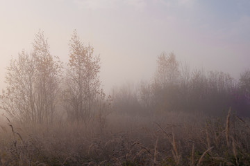 Walk in the fog forest.