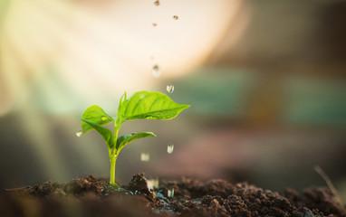 Watering plants, macro, concept
