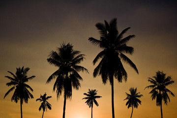 Silhouette of many coconut palm trees at sunset with copy space