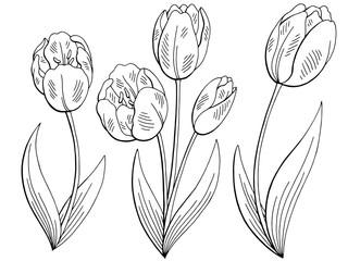 Tulip flower graphic black white isolated sketch set illustration vector